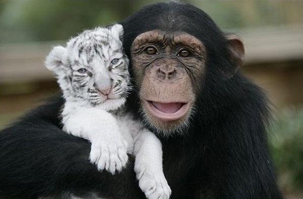 tigre-y-mono-jugando