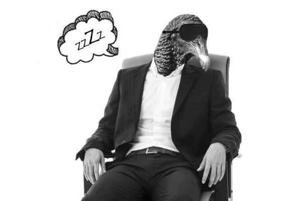 zopi dormido