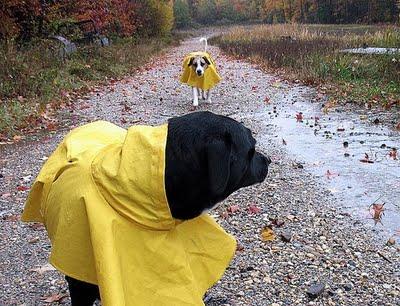 Impermeables-para-perros
