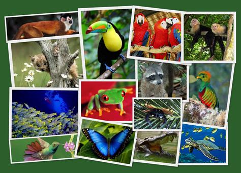 collage-fauna
