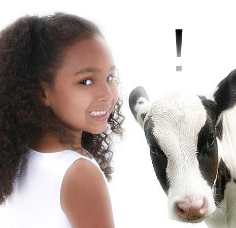 calf-white-background-14699264