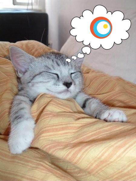 gato-en-la-cama